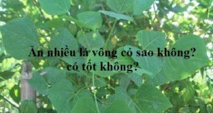 an-nhieu-la-vong-co-tot-khong